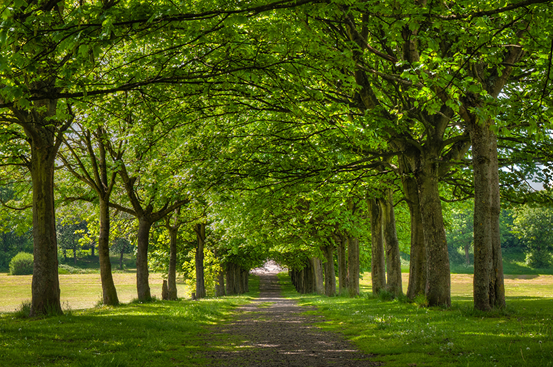 uk summer treeline & pathway Entwined