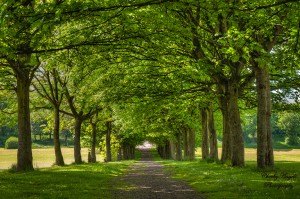 fine art, trees, green, entwinded, uk, Salford, summer, pathway, duchy, landscape photography, beauty, leaves, tree trunk, treeline, tree line path, england, Manchester, pathway